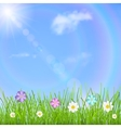 Background with sky sun grass and flowers vector image
