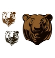 Big grizzly bear vector image