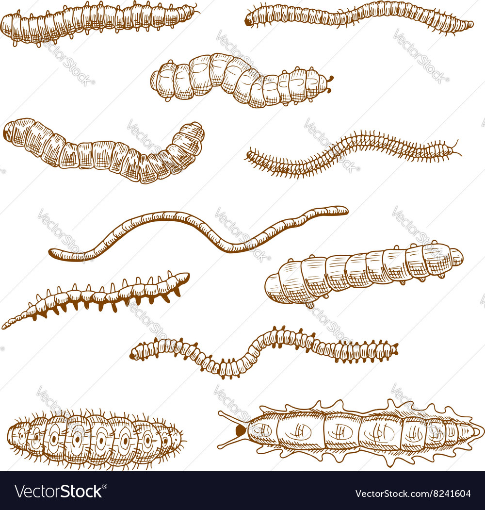 Caterpillars earthworms slug and centipedes vector