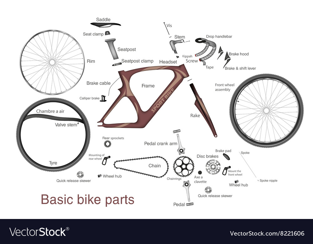 Infographic of main bike parts with the names vector