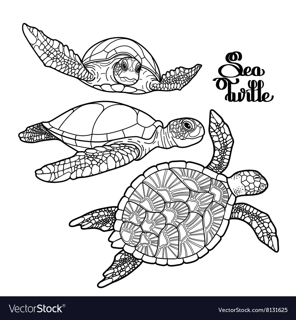 Hawksbill sea turtle collection vector