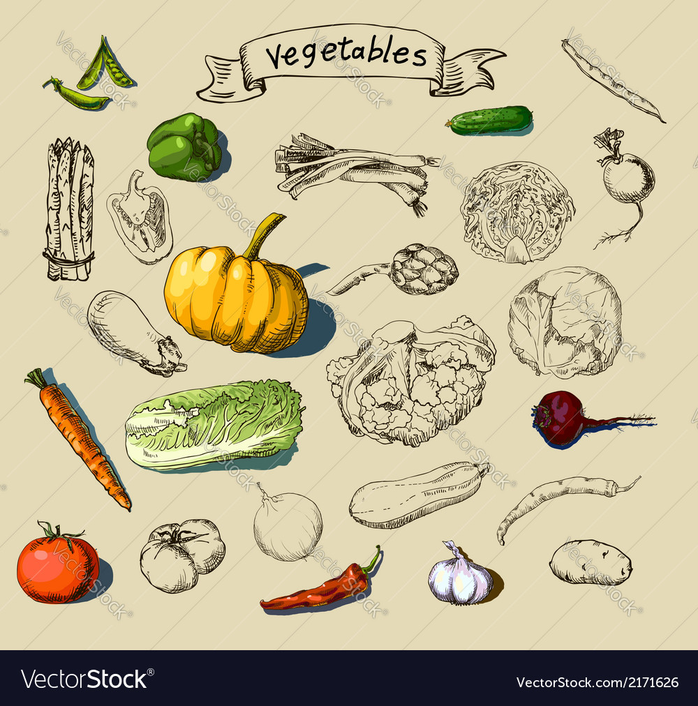 Handpainted vegetables vector