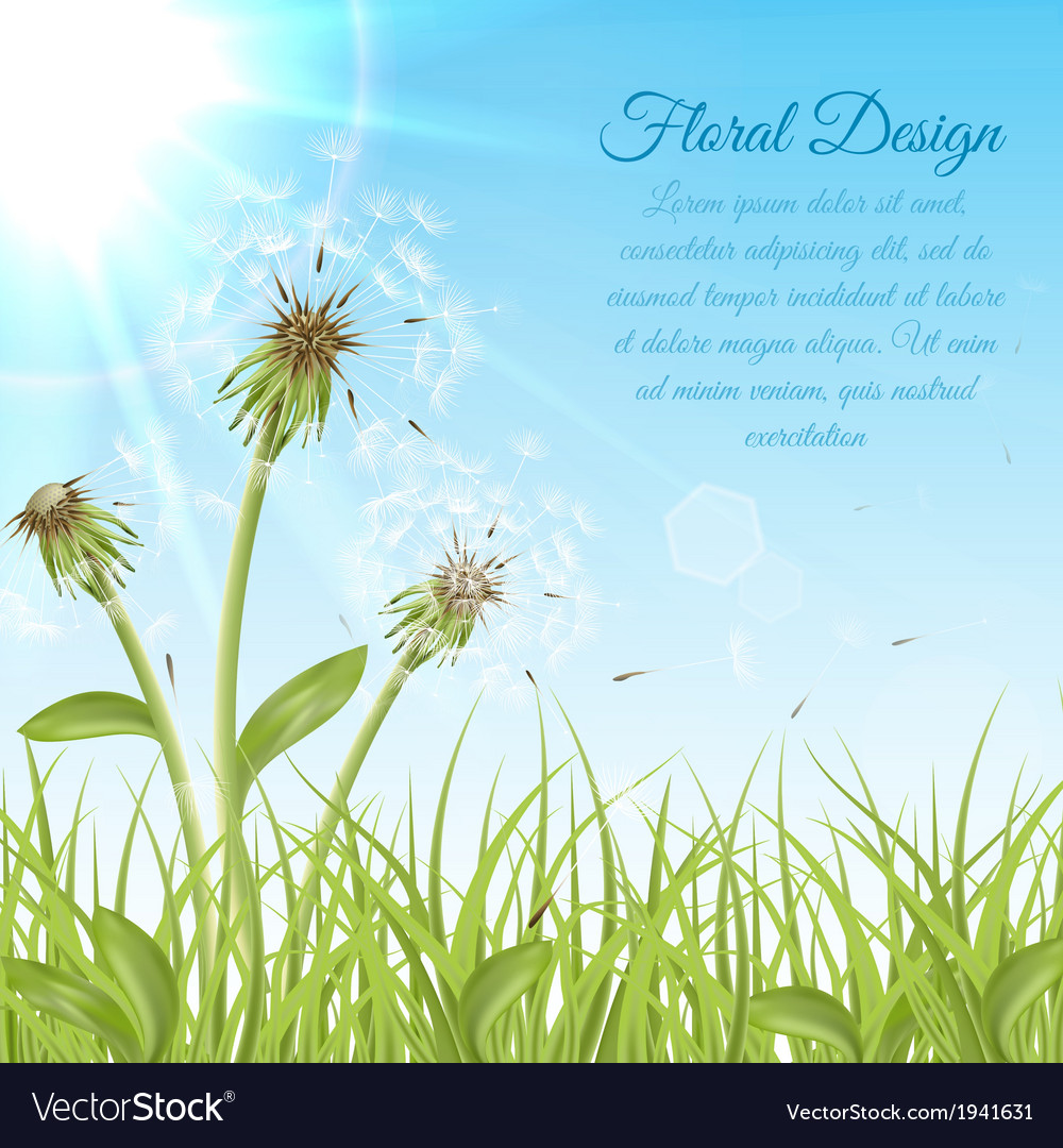 White dandelions on green grass vector