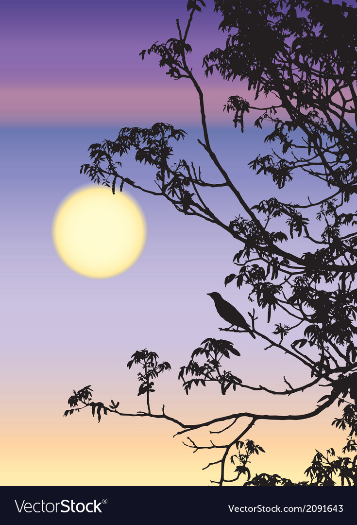 Nightingale song greets the spring sun vector