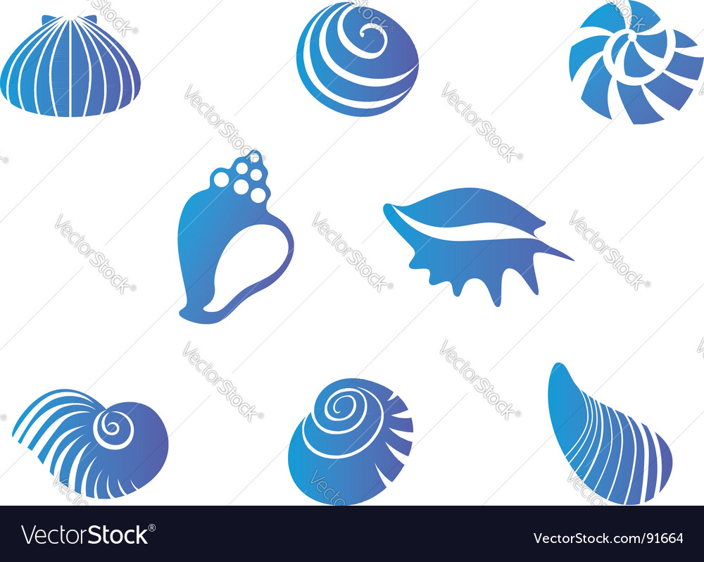 Set of seashells vector