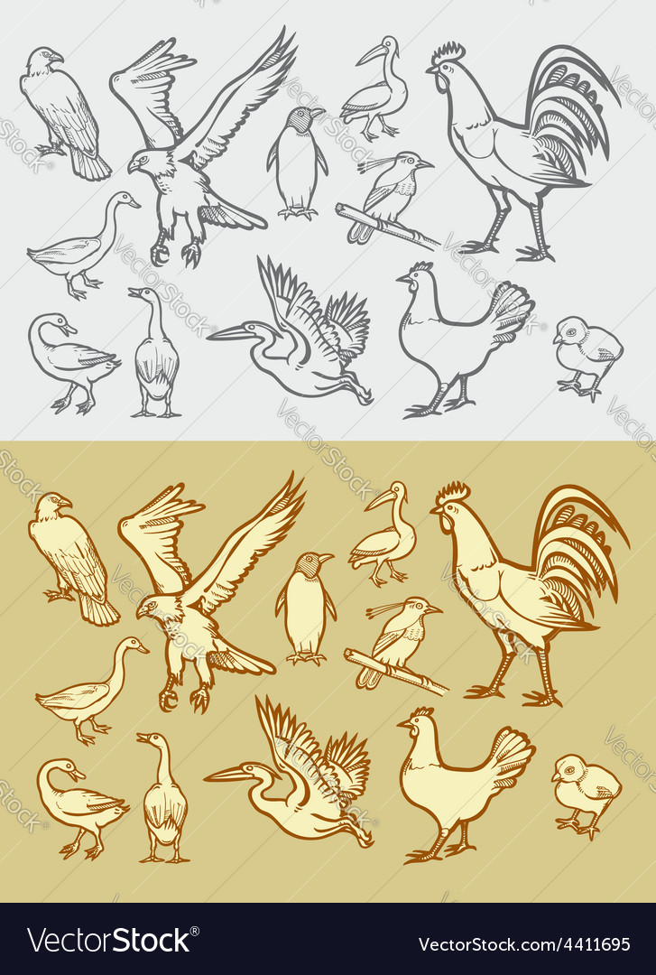 Bird sketch 1 vector
