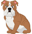 cartoon bulldog sitting vector image