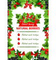 berry sweet fruit natural food banner template vector image