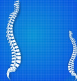 Spinal diagram vector image vector image