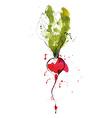 Watercolor of radish vector image