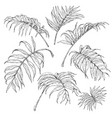 palm fronds sketch vector image vector image