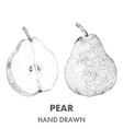Sketch of pear Hand drawn Fruit collection vector image