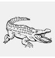 Hand-drawn pencil graphics crocodile alligator vector image