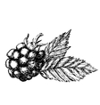 Blackberry hand drawn sketch vector image vector image