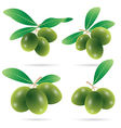 set of olives vector image