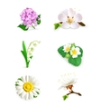 Spring flowers set vector image vector image