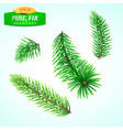 set of fir branches christmas tree pine tree vector image