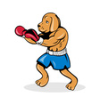 boxer dog with gloves vector image