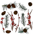 branches from forest and pine cones vector image