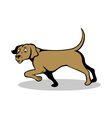 confused pointer dog vector image