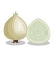fresh onion vegetable isolated icon vector image