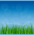 bright and juicy green grass on a blue sky vector image