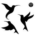 black hummingbird silhouette vector image