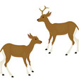 cute deer icon isolated on white vector image