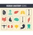 Human internal organs Anatomy set vector image