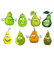 Green yellow and orange pear fruits vector image