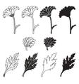 Chrysanthemum flowers and leaves vector image