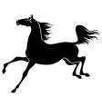 horse gallop vector image