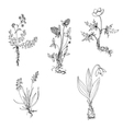 wild plants with roots vector image
