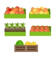 Set of Boxes with Fruits vector image
