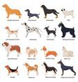 profile dogs icon set vector image