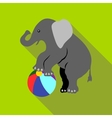 Elephant on a ball icon flat style vector image