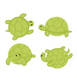 green tortoises vector image
