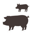 silhouette pig on white background vector image