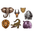 african animal sketch set of elephant lion hippo vector image