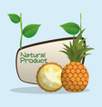 pineapple natural product label vector image