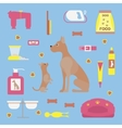 Infographic elements with dog care vector image