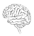 brain isolated anatomy sketch human brain lateral vector image
