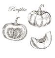 pumpkin hand drawn ink and pencil drawing vector image