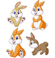 Cute bunny collection set isolated vector image vector image