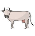 Indian brown cow vector image