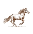 White horse running gallop sketch portrait vector image