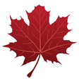 leaf red vector image