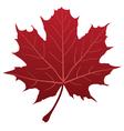 leaf red vector image