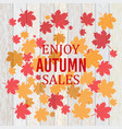 autumn fall sale poster with maple leaves vector image
