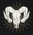 ram skull design element for poster t shirt vector image